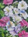 White Pink and Purple Petunias