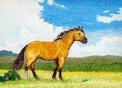Little Horse on the Prairies
